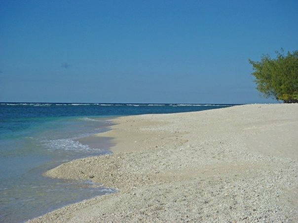 Lady Elliot Island Beach