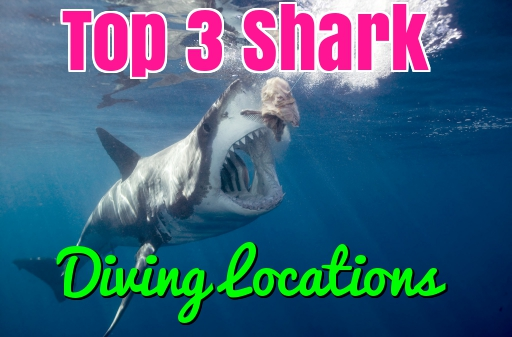 top shark diving locations